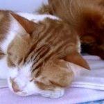 犬の足にシッポ挟まれ嬉しくてゴロゴロいう猫  Happy cat !!