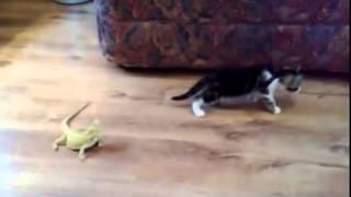 背後のトカゲにビックリする猫 【アニマルビデオ】