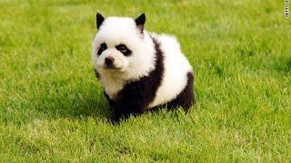 え? パンダ? 犬?