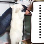 ママに可愛くご飯をねだる、健気な犬のふるまい方/How to behave a healthy dog, which desires cute rice for mama