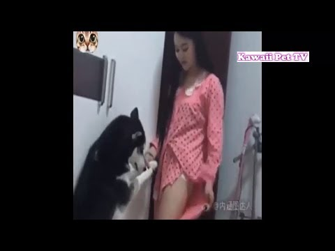 「おもしろ犬」最高おもしろ犬の動画●笑わずにはいられない犬の動画集 #1