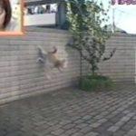 身体能力の高いバカ犬-その2