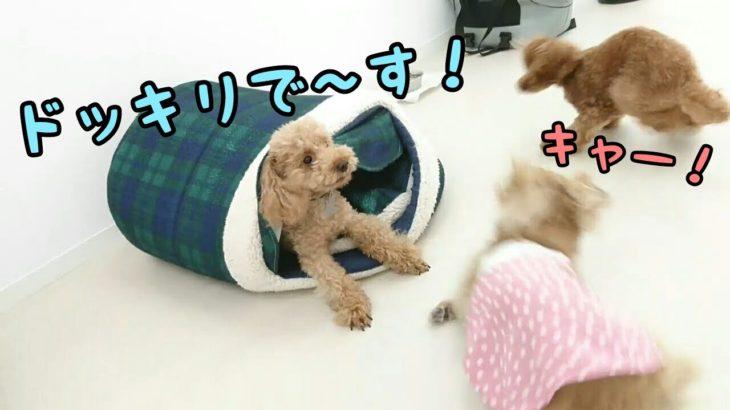 ドッキリドッグ 【24時間対応】犬のペットホテル 8月21日