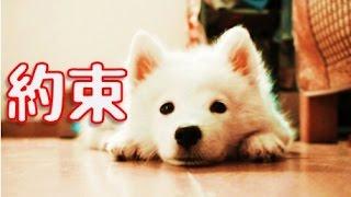 【泣ける犬の感動実話】愛犬ロッキーとの約束【ペット動物】