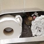 トイレットペーパーでカワイイ動物が巣を作っていて、清掃員ビックリ!