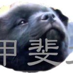 かわいすぎる! 「甲斐犬」の子犬 Too much Kawaii lovely Puppy【日本犬特集】