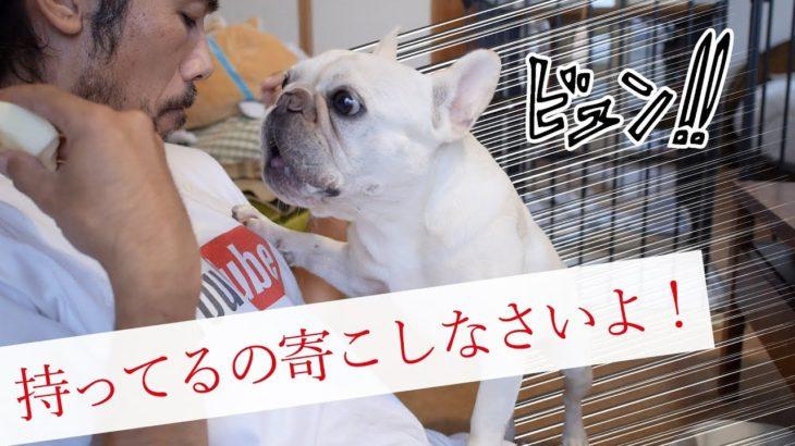 欲望を抑えきれない犬の可愛い行動
