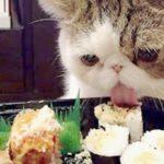 猫 おもしろ しゃべる