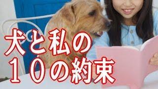 犬と私の10の約束 【動物愛】 泣ける話