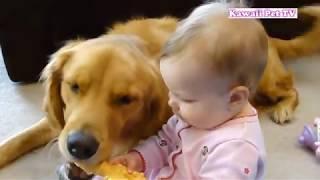 おもちゃを取りたいけど手が届かない赤ちゃんに助ける犬・隣にぴったり寄り添う姿に癒される・かわいい赤ちゃんとゴールデンレトリバー