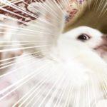 【犬の爆笑ハプニング】機嫌をなおした瞬間に!!