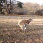 ウンチしながら逃げる犬