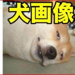 【おもしろ動物】いぬ・イヌ・犬編【爆笑画像集1】