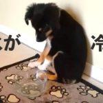 子犬さん、冷たい水にビックリ!【PECO TV】