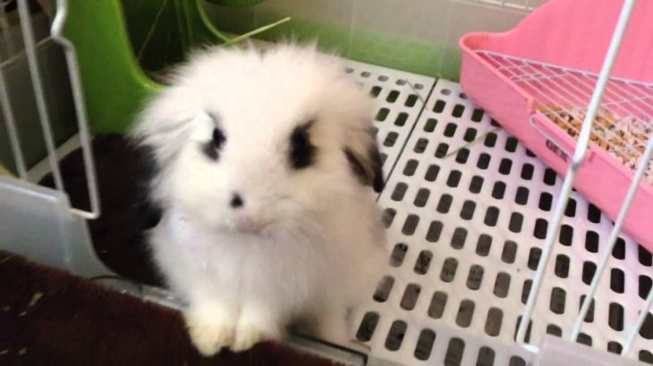 子犬のようなカワイイウサギさんw