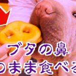 グロすぎる犬用おやつを発見…!うちのブサ犬の食べ方にめっちゃ笑ったww