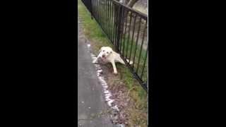 【ペットおもしろ】必死に柵をくぐりぬける犬