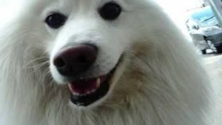 わが輩は犬 【自作】