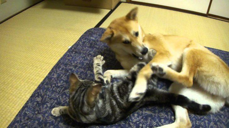 元気な猫と犬のじゃれあい
