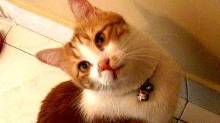 呼ぶとお返事しながら家に戻る猫(犬も猫のお迎えに行きます) Cat comes home