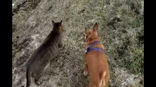 犬猫なかよし散歩.wmv