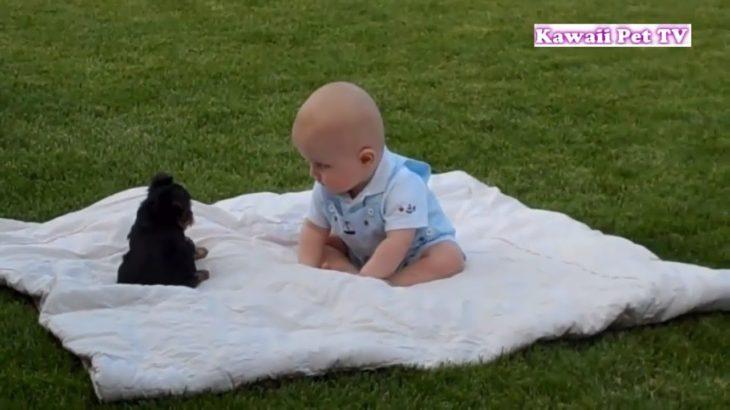 初めて子犬に会った赤ちゃんの反応がちょうかわいい・子犬と赤ちゃん謎の会話