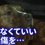 【海外犬の泣ける話】おてんばなだけで〇〇回も里親から返された犬…