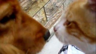 うちの犬と野良猫が友達になったよ(MAX来た~猫欲しい)
