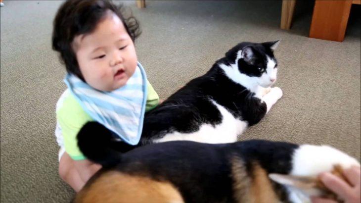 赤ちゃんと猫と犬  5ヶ月の赤ちゃん、お座りできた みんなでワラワラ