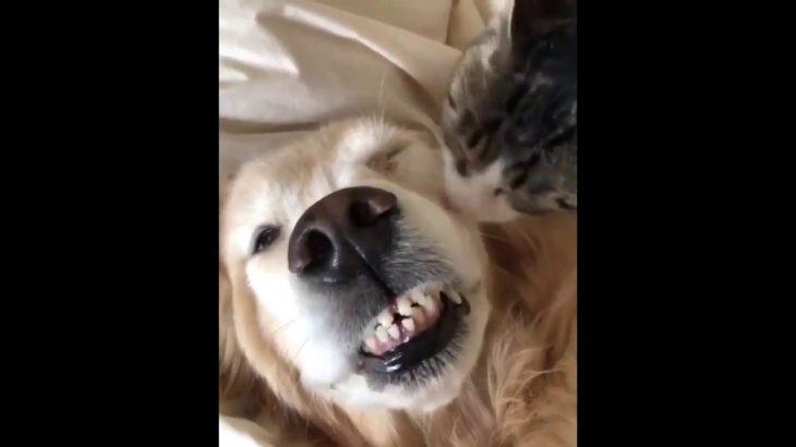 「絶対笑う」最高におもしろ犬,猫,動物のハプニング, 失敗画像集 #9