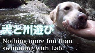 犬と川遊び Taking a swim with dog in the river