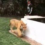 トラを驚かす