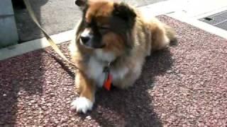 近所で話題のかわいい犬。