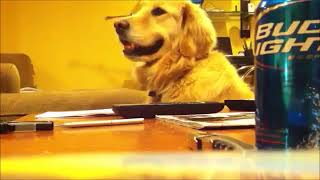 【おもしろ 犬】笑ったら負け!犬の面白動画【可愛い動物たちの特集】
