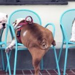 「絶対笑う」最高におもしろ犬,猫,動物のハプニング, 失敗画像集 #13