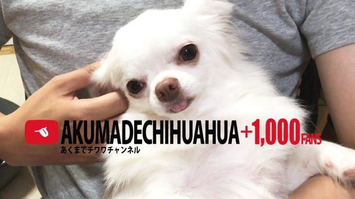 【1000人記念動画】インスタはじめました!1,000 anniversary video! Insta began