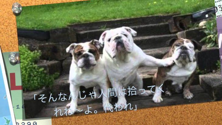 ボケて 犬 可愛い わんこ 3