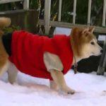 雪にびっくりお庭で散歩!