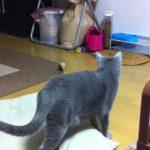 犬になりたい猫 (動物ペット面白動画)cat mov
