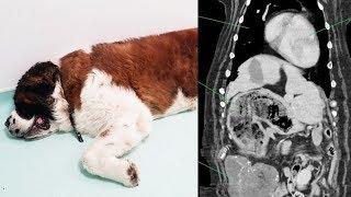 大きな腫瘍があると診断され、手術をした犬。しかしそこから出てきたモノに飼い主さんビックリ!