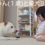 赤ちゃん(1歳)と柴犬3 / Infant and Shiba Inu 3
