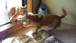 犬に高速猫パンチをする猫 ~High-speed cat punch~