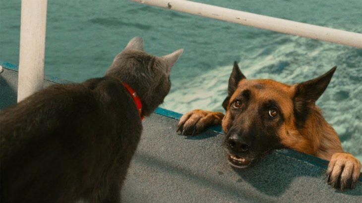 「絶対笑う」最高におもしろ犬,猫,動物のハプニング, 失敗画像集 #38
