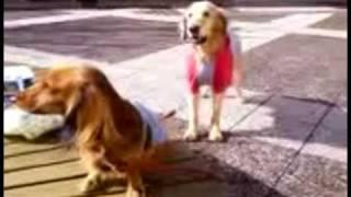 びっくりする二匹の犬!Surprised two dogs.