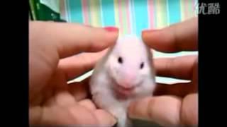 驚きすぎるネズミ