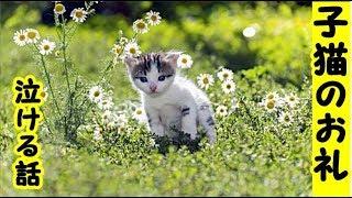 泣ける話『子猫のお礼』一生懸命看病したけど亡くなってしまった野良の子猫のお話・招き猫ちゃんねる