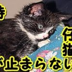 【感動 泣ける話 猫】全身を接着剤で塗り固めた状態 その後の姿に涙が止まらない 【感動-猫実話-虐待-涙腺崩壊】・招き猫ちゃんねる
