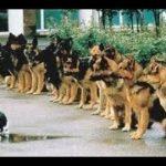 「絶対笑う」最高におもしろ犬,猫,動物のハプニング, 失敗画像集 #55