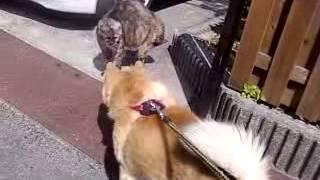 うちの犬vsどっかの猫