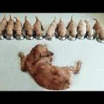 「絶対笑う」最高におもしろ犬,猫,動物のハプニング, 失敗画像集 #53